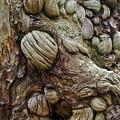 Trolls Skin by Douglas Barnett