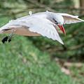 Tropic Bird by Werner Padarin
