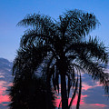 Tropic Sunset In Floirida by Allan  Hughes