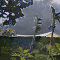 Tropic Wind by Craig Newland
