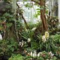 Tropical Affair by Veron Miller