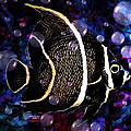 Tropical Angel Fish by Artful Oasis