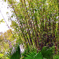 Tropical Bamboo by Pamela Williams