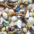 Tropical Beach Seashell Treasures 1529b by Ricardos Creations