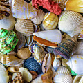 Tropical Beach Seashell Treasures 1550b by Ricardos Creations