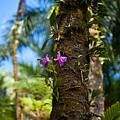 Tropical Beauty by Mike Reid