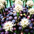 Tropical Berries 3 by Alina Davis
