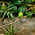 Tropical Bird 3 by Douglas Barnett