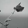 Tropical Bloom by Jenny Regan