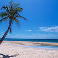 Tropical Blue Skies And White Sand Beaches by James BO Insogna