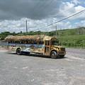 Tropical Bus by Cynthia Iwen