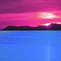 Tropical Delight by John Brennan