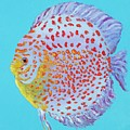 Tropical Discus Fish With Red Spots by Jan Matson