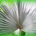 Tropical Fan by Ed Weidman