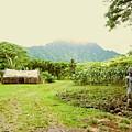 Tropical Farm by Halle Treanor