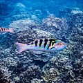Tropical Fish Bay by Michael Scott