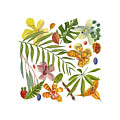 Tropical Flora by World Parrot Trust