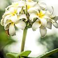 Tropical Flower 7 by Jijo George