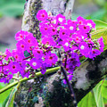 Tropical Flowers Of Costa Rica by William Rogers