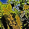 Tropical Foliage A-la Monet by David Frederick