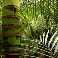Tropical Forest Jungle by Les Cunliffe