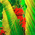 Tropical Fusion by Stephen Anderson