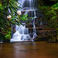 Tropical Garden by Reid Northrup