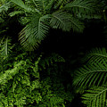 Tropical Jungle by Vanessa GFG