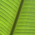 Tropical Leaf Detail by Joe Carini - Printscapes
