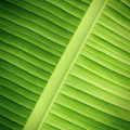 Tropical Leaf by Wim Lanclus