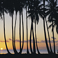 Tropical Palm Sunset by Don King - Printscapes
