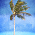 Tropical Palm Tree by Phil Perkins