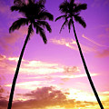 Tropical Palm Trees Silhouette Sunset Or Sunrise by Lane Erickson