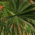 Tropical Palms 1 by Frank Mari
