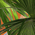 Tropical Palms 2 by Frank Mari