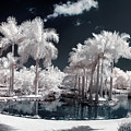 Tropical Paradise Infrared by Adam Romanowicz