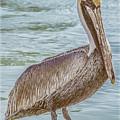 Tropical Pelican by Julie Palencia