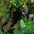 Tropical Rainforest by HH Photography of Florida