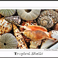 Tropical Shells... Greeting Card by Kaye Menner