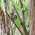 Tropical Squirrel by Kristin Elmquist