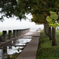 Tropical Storm Hermine by Dale Powell
