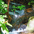 Tropical Stream by Pamela Walton