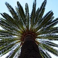 Tropical Summer Palm Tree by Artpics