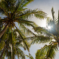 Tropical Sun by James BO Insogna