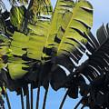 Tropical Sunlight And Shadow by Linda Glenn