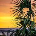 Tropical Sunrise by Capturing The Carolinas