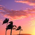 Tropical Sunrise by Tomas del Amo - Printscapes