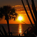 Tropical Sunset by Terri Mills