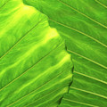 Tropical Vibrant Green by Philip Openshaw