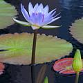 Tropical Water Colors by Byron Varvarigos